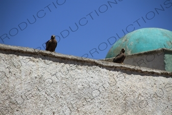 Eagles on a Building in the Old City of Harar