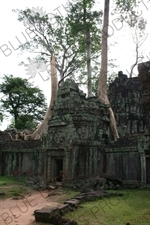 Trees Growing out of Doorway at Ta Prohm in Angkor