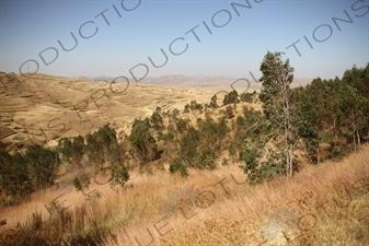 Countryside around Keren