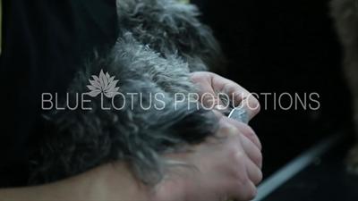 Dog Grooming Salon in Beijing