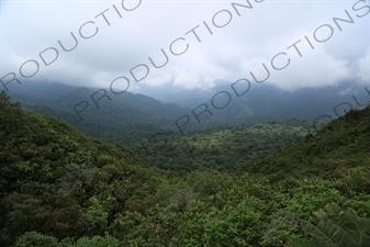 Rainforest in Monteverde Cloud Forest Reserve