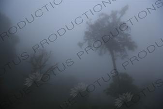 Trees in the Mist near Monteverde