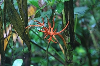 Orange Flower in Monteverde Cloud Forest Reserve