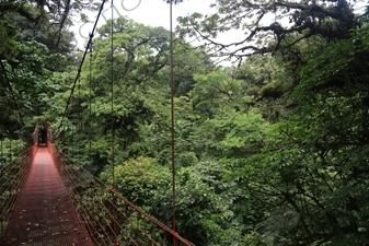 Rainforest and Suspension Bridge in Monteverde Cloud Forest Reserve